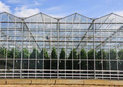 Greenhouse Сomplex «Vyborzhets»